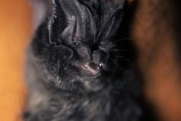 Bats have been recorded flying at night in the Chichester area